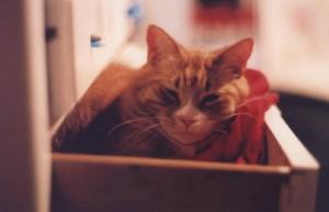 cat using drawer as litter box