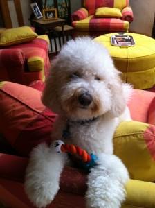 ziggy-instinct-dog-food