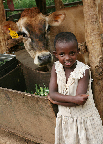give a cow with heifer international
