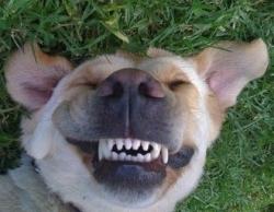 dental health for dogs
