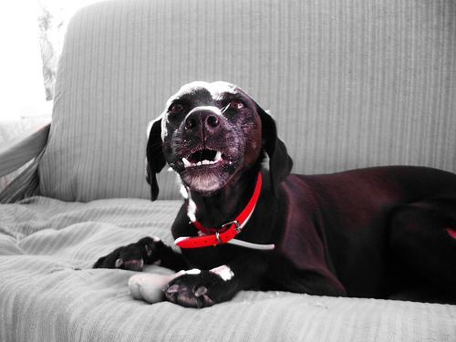 agressive dog