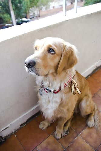 sad doggie with separation anxiety