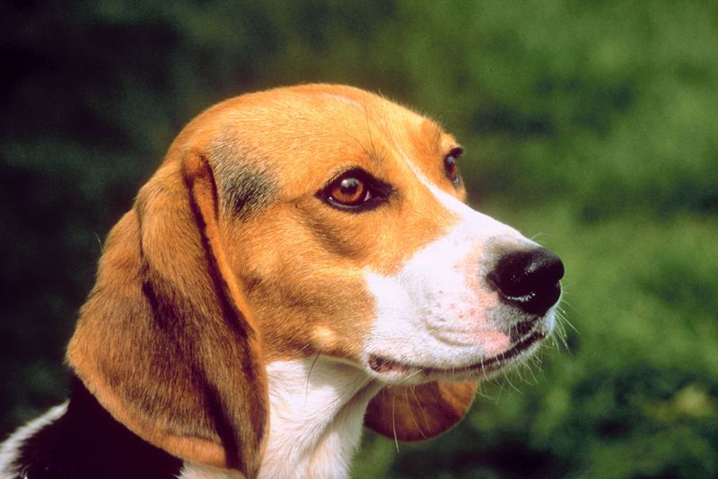 helping your dog overcome stress