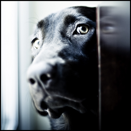 pet separation anxiety