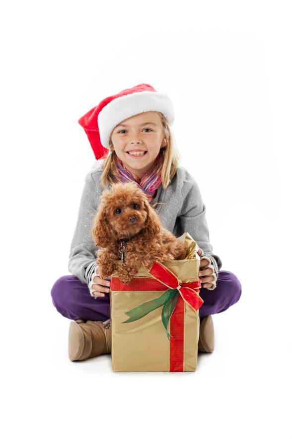 pet for christmas