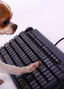 pet typing