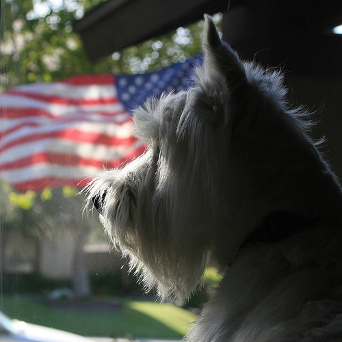 fourth of july and dog