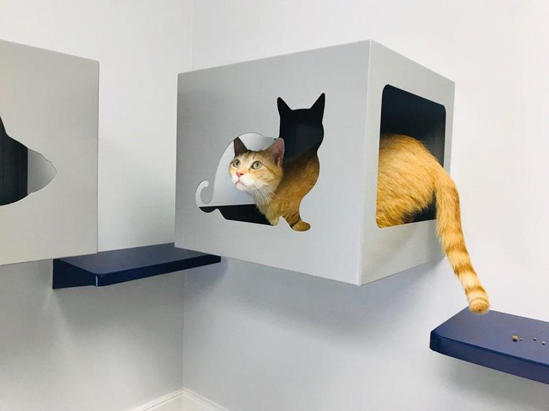 cat exam boxes