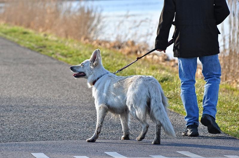 Transitioning your dog