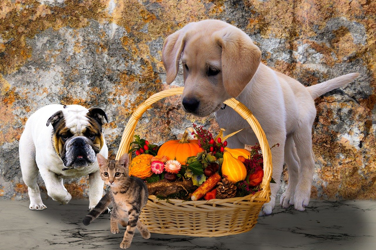 puppies and kitten thankgiving