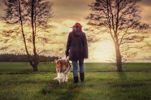 senior dog wellness