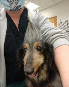 lucy senior dog