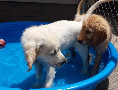 Teaching Dogs to Be Friends