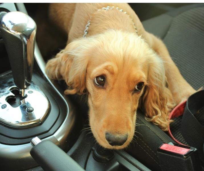 nervous dog in car