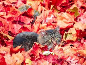 fall allergies for pets