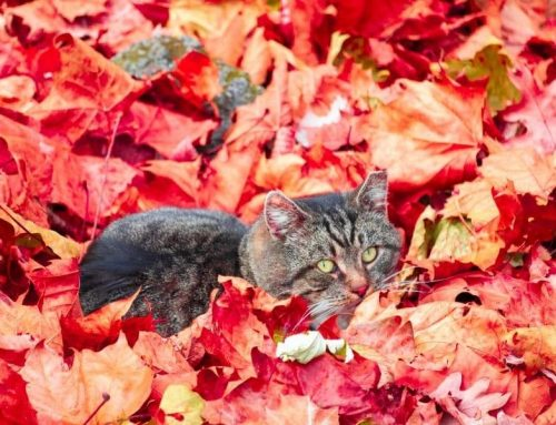 Fall Choo! (Fall Allergies for Pets)