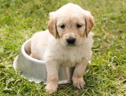 Six Skills to Give Your New Puppy